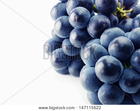 Plump Kyoho grapes (giant mountain grapes) isolated on white.Focus on foreground.