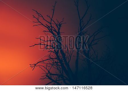 silhouette dry dead tree on a background of wildfire