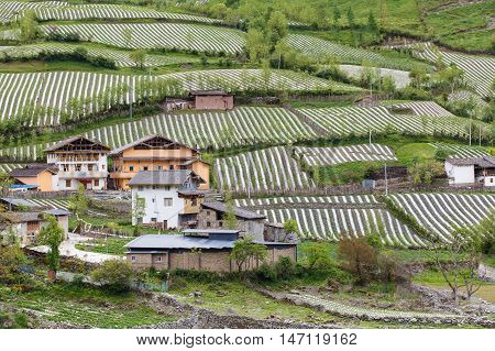 Village in Rilong Town agriculture vegetable growing is the main occupation is a town in Xiaojin County in the Ngawa Tibetan and Qiang Autonomous Prefecture of Sichuan China