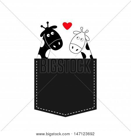 Cute cartoon black white giraffe in the pocket Boy girl with heart. Camelopard couple on date. Long neck. Funny character set. Happy family. Love greeting card. Flat design. Isolated. Vector