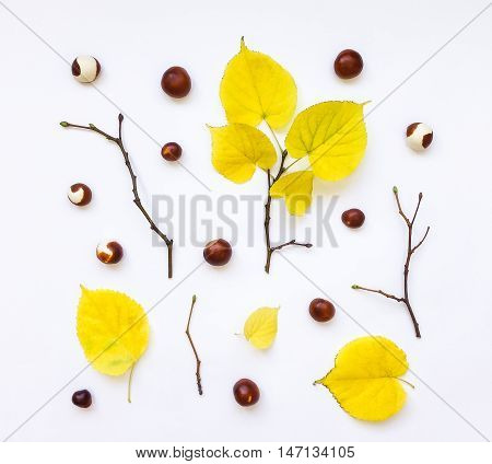 Closeup of set of autumn yellow leaves chestnuts and branches on white background. Top view flat lay view from above