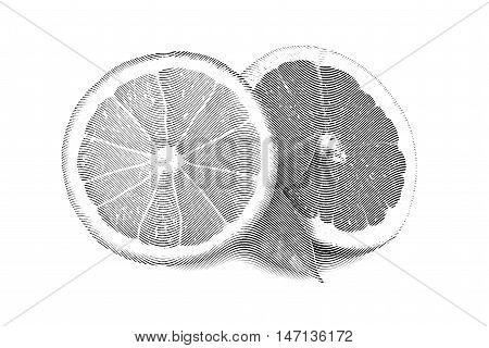 Drawn Sketch painting orange and grapefruit painting on white background. Illustration of fruit orange with leaves and grapefruit Black and white
