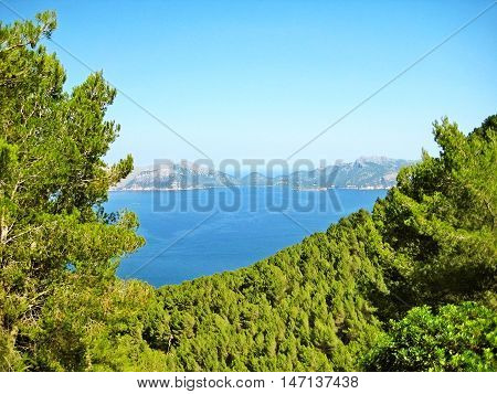 Bay of Pollenca peninsula Formentor view from peninsula Victoria - pine trees at coastal cliff in front ocean view