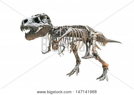 A T-rex skeleton isolated on white background