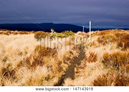 Path Trough The Bushes In Tongariro National Park