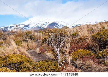 Bushes In Front Of Volcano In Tongariro National Park