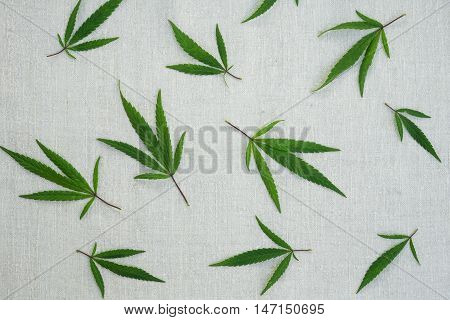 Leaves of cannabis on hemp canvas. Hemp products. Agricultural technical culture