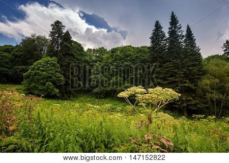 Evening landscape with mountain forest and clouds