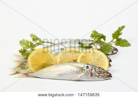 Sardine pilchard herring Fish raw fresh on white background