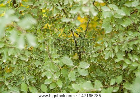 a full frame natural green leaves background