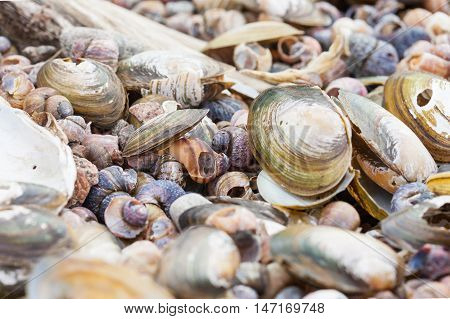 textured background of old damaged clams shells on the sea shore
