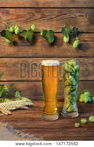 Light beer glass lager malt beer on wooden table with green hops in bar or pub still life with wooden background