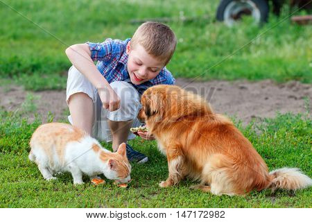 Smiling Little Boy Feeds Homeless Cat And Redhead Stray  Dog In The Yard