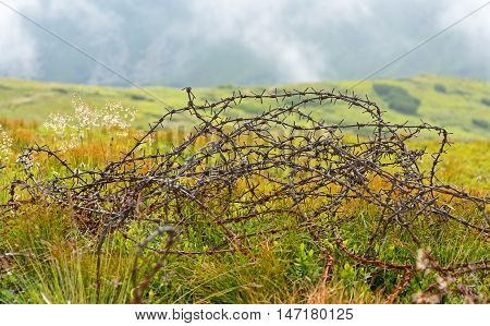 Skein Of Old Barbed Wire