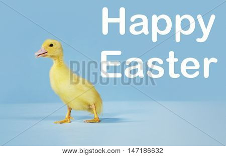 Cute duckling standing against blue background with text saying happy easter