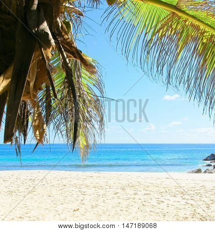Jungle and Sea Palms Overhanging