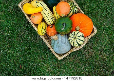 A basket with assorted pumpkins, squashes on the green grass. Fall Harvest.