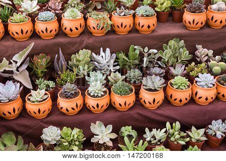 assortment of plants in clay pots on a stand for sale