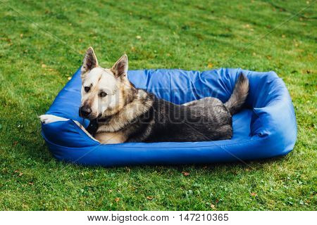 dog on his bed, green grass background