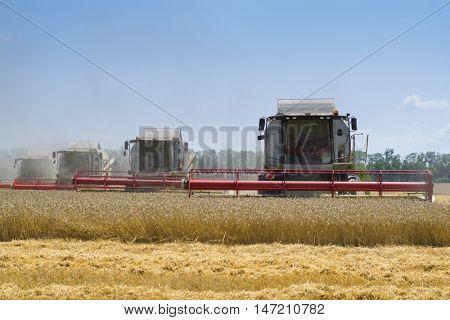 KRASNODAR REGION, RUSSIA - JUL 7, 2015: Harvesters harvest yellow wheat field, In 2015 in Krasnodar region have collected record grain harvest - 102 million tons of grain