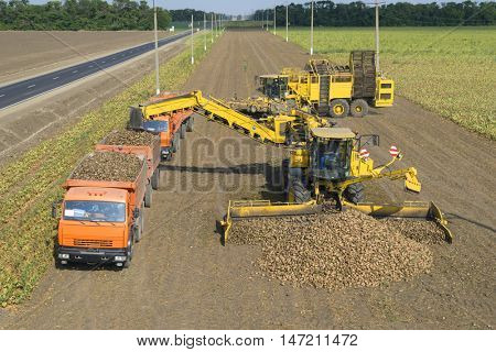 KRASNODAR REGION, RUSSIA - AUG 19, 2015: Machine loads of sugar beet into truck at field, In 2015 in Krasnodar region have collected record grain harvest - 102 million tons of grain