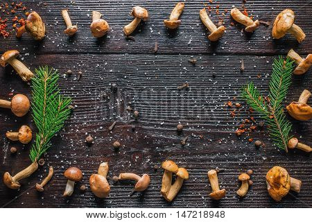 Frame of fresh bovines mushrooms and spices on the dark wood surface