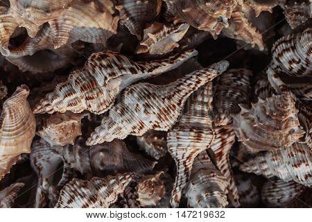sea shell, seashell photo, seashell pile, seashell for sale
