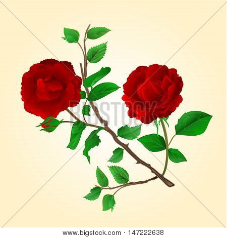 Purple roses stem with flowers and bud vintage vector illustration