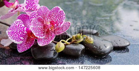 Pink orchid isolated on black background.Branch of pink orchids on a black background.Spa concept with zen stones and orchid.