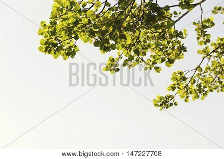 Vibrant Foliage On High Branches Treetops With Clear Blue Sky