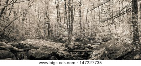 Infrared photo panorama of forest in South Carolina