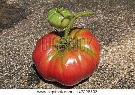 Big red tomato and small green tomato closeup