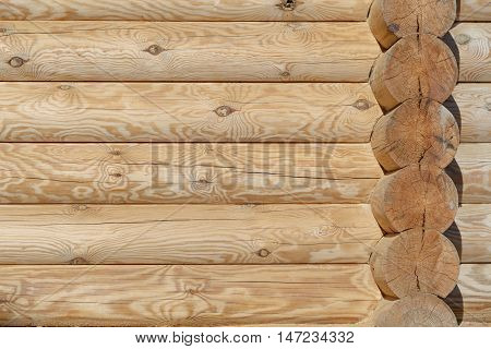 New wooden wall. Rough surface of the log.