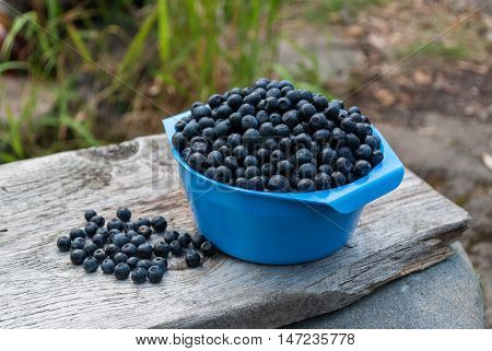 Blue bowl with blueberries on a wooden board.