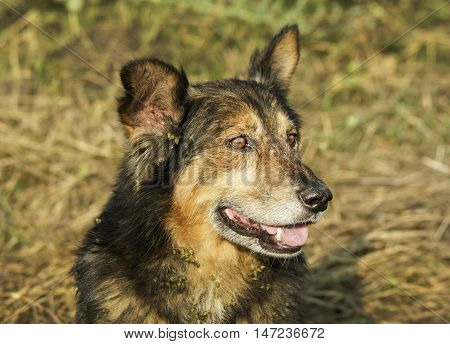 black brown shaggy pooch is on the grass