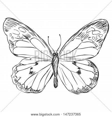 Vector Sketch Illustration - Butterfly