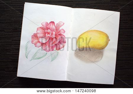 Sketchbook spread with rose and mango drawing. Hand-drawn tropical flower and exotic fruit. White paper and colorful pastel pencils. Asian travel sketches. Image of black table with colored album