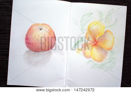 Sketchbook spread with apple and hibiscus drawing. Hand-drawn tropical flower and exotic fruit. White paper and colorful pastel pencils. Asian travel sketches. Image of black table with colored album
