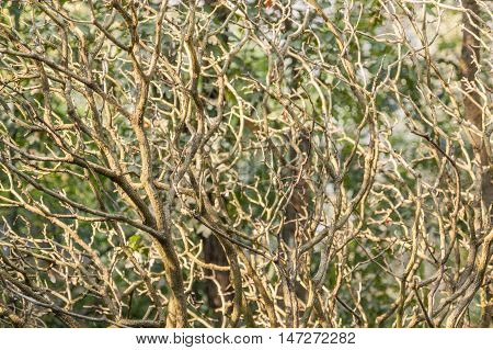 full frame twigs background in natural ambiance