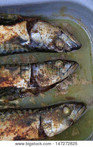 Mackerel Fish Background
