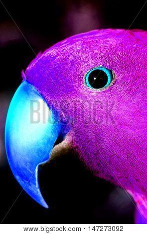 Parakeet close-up of head