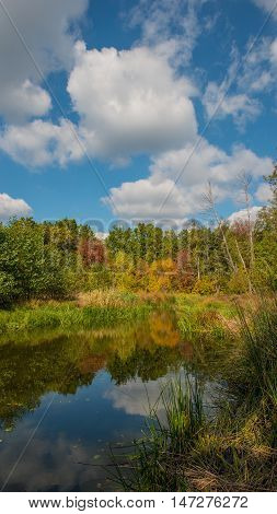 vertical panoramic photo autumn trees in the river