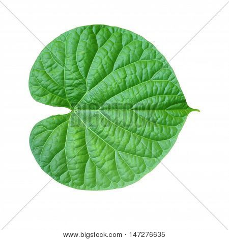 Green leaves isolate on a white background.