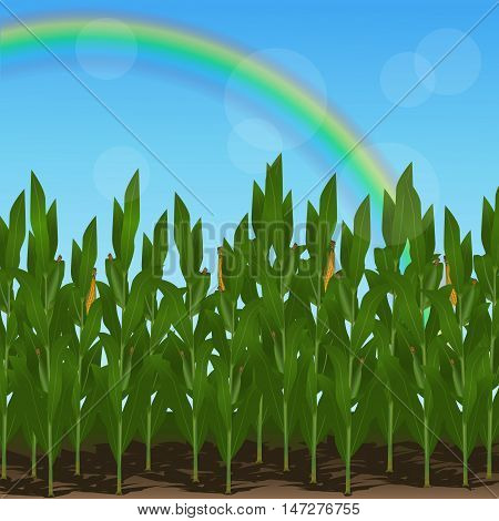lawn with corn and rainbow on a blue background