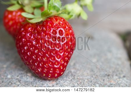 Close up of delicious strawberries growing organically in the garden hanging over a paver walkway ripening in the sun.