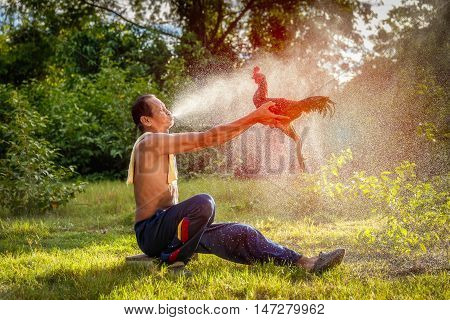 Asian old man cleaning the thai gamecock