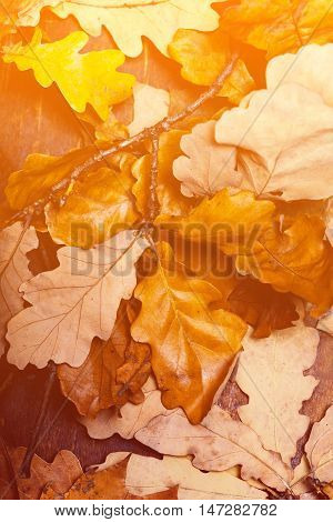Abstract background with autumn leaves. Yellow Fallen autumn leaves on draw wooden old background