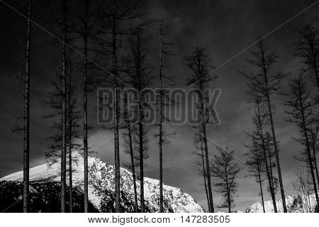 black and white dramatic landscape, dead forest and snow covered mountain