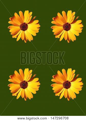 Abstract creative colourfull floral greeting card scene