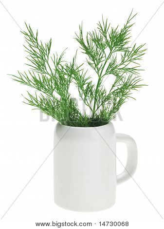Fresh Green Dill Bunch In Small Ceramic Noggin
